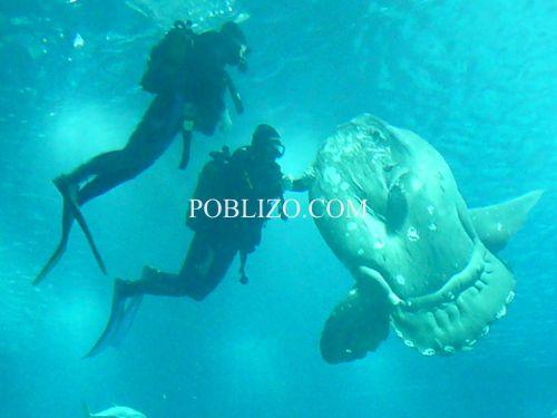 Глобалният океан- sunfish