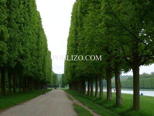 Алея в парка на замъка Версай