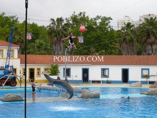 Шоу с делфини