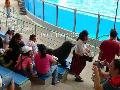 Морски лъвове раздават целувки на зрителите на шоуто
