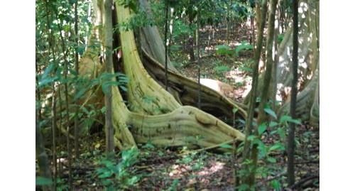 Дъждовната гора