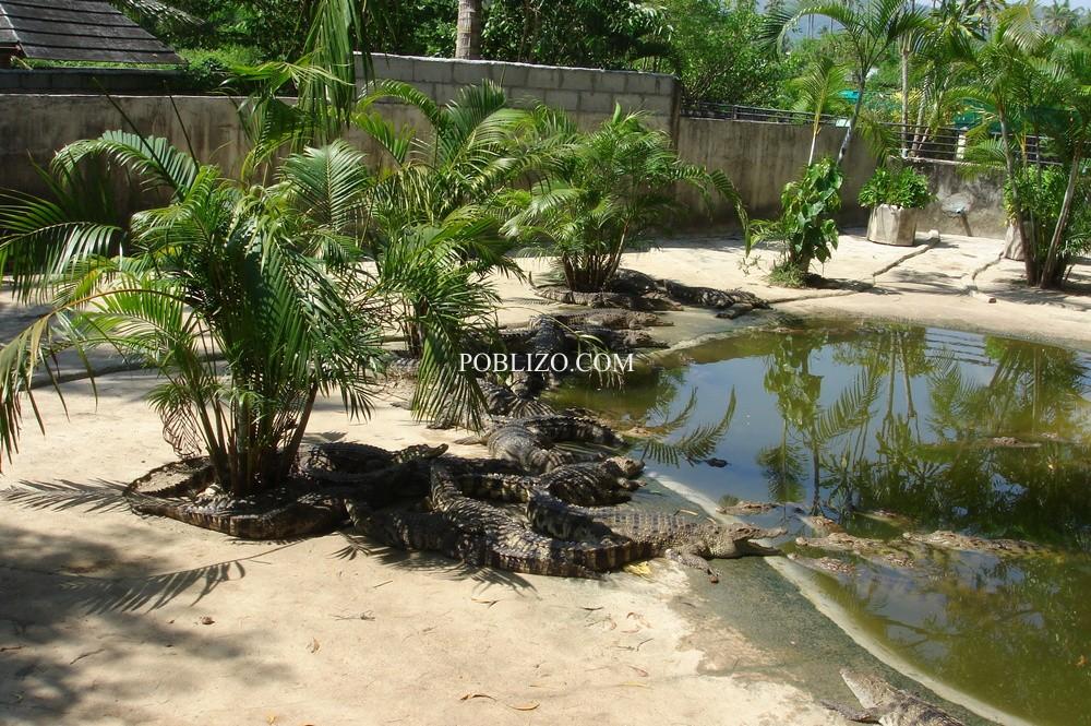 Зоологическата градина