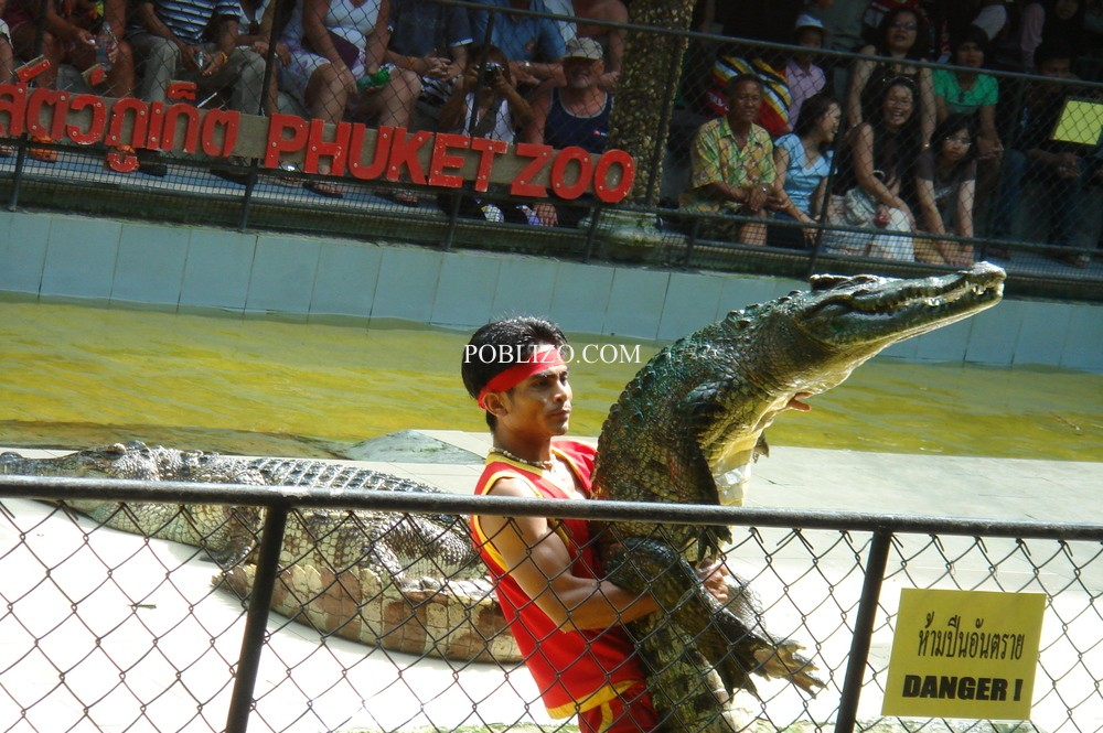 Представление с крокодили