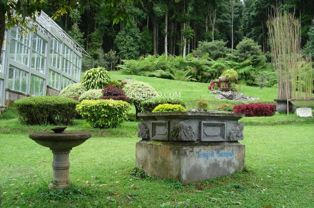 В ботаническата градина