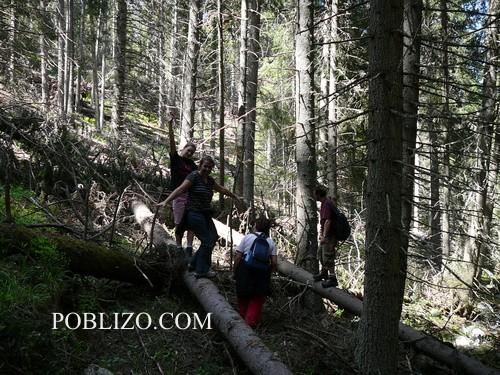 Напряко през гората