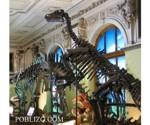 dinozavur