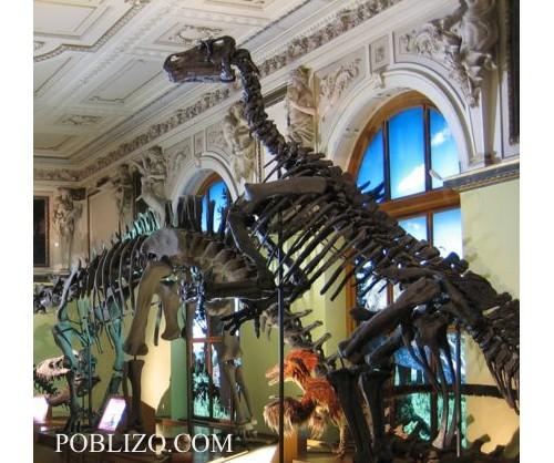 Скелети на динозаври в природонаучния музей