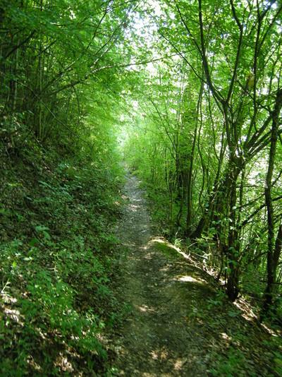 Лежерната пътечка към същинската еко-пътека над река Ябланица