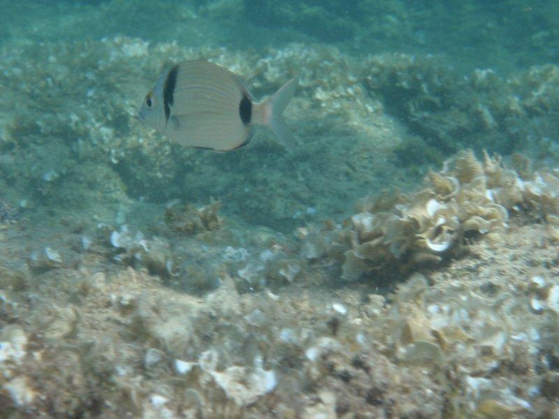 Риба номер 232