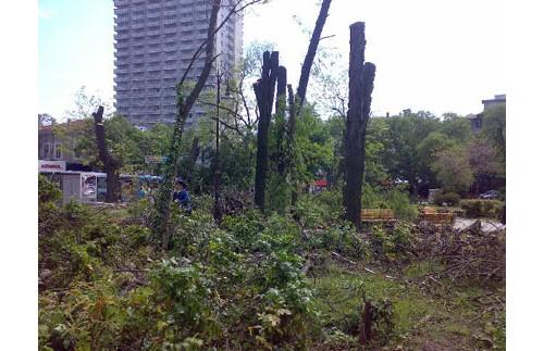 Тайфун... Не! Сеч в градинката на Севастопол!
