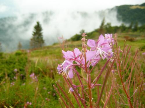 Малко нежна планинска красота, окъпана от дъжда