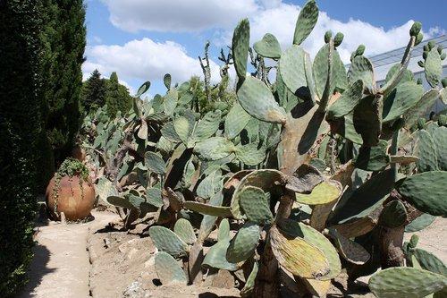 В света на кактусите