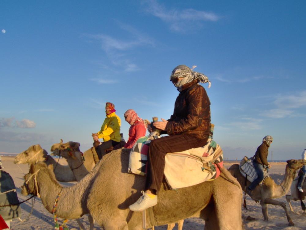 На камила