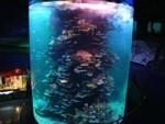 akvarium_asia