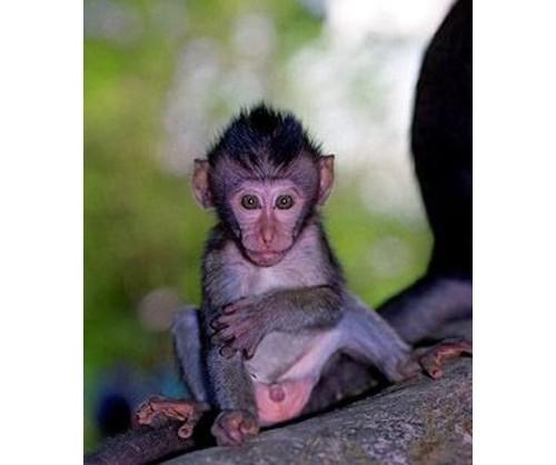 Маймунките