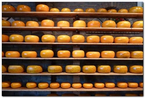 Гауда сирене