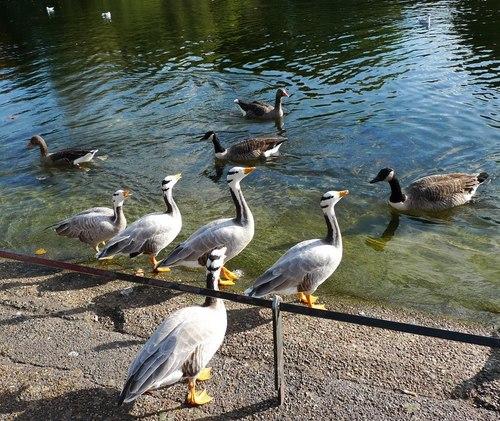 В Лондонските паркове