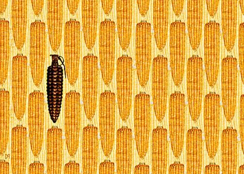 gmo_corn