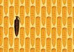 gmo_corn_small