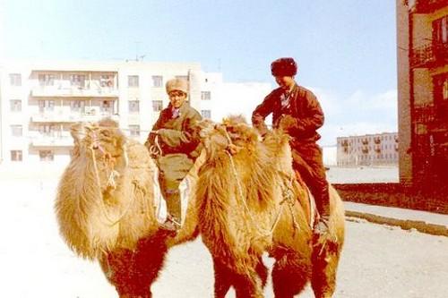 Камилите