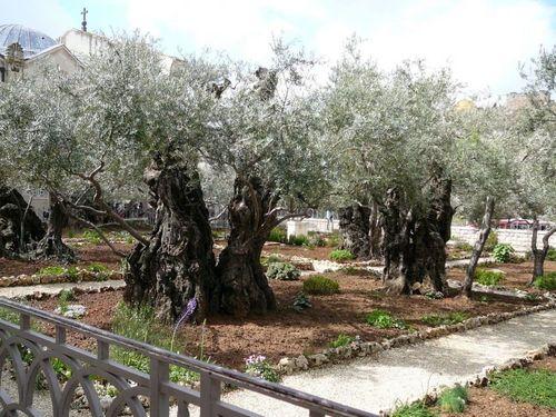 Гетсиманската градина