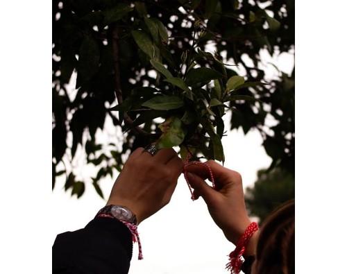 И Българските мартенички красят градините на Палатино