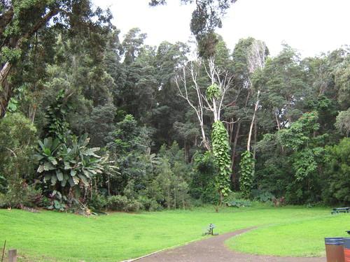 Дъждовната гора по пътя за Хана