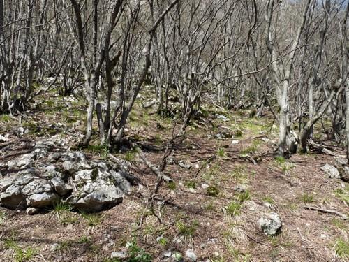 Дърветата на Толкин