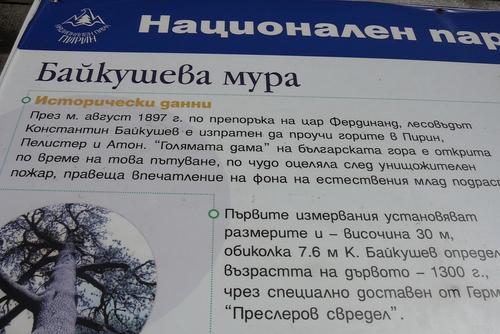 Информационна табела за Байкушевата мура