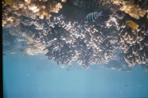 Големия бариерен риф