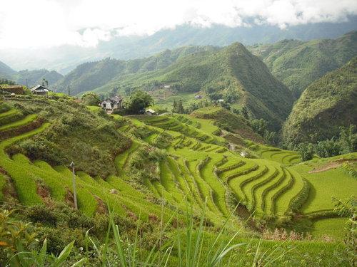 Виетнам, оризища