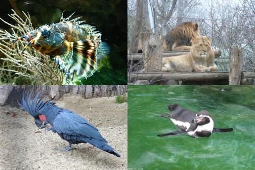 viena_zoo