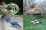viena_zoo_small