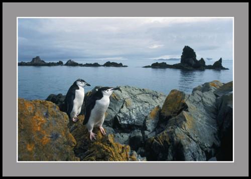 Пингвини по скалите