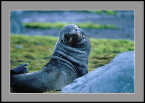 Поглед (Ушат тюлен)