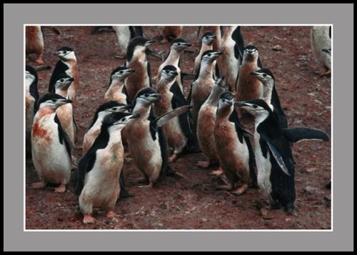 Пингвинско ежедневие