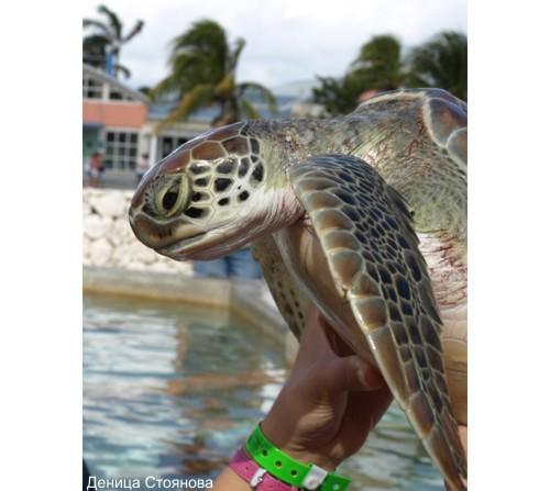 Сърдитата костенурка