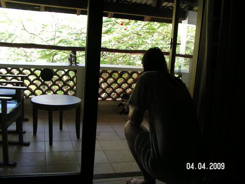Любопитната маймунка