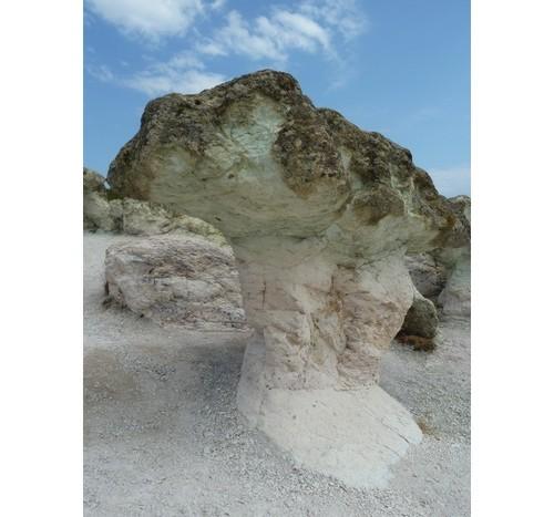 Каменна гъба