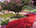 istanbul_garden