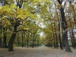 Борисовата градина през есента