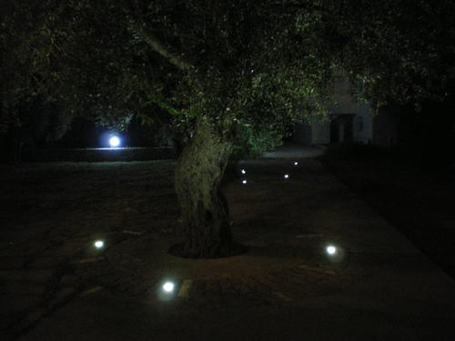 Маслините през нощта