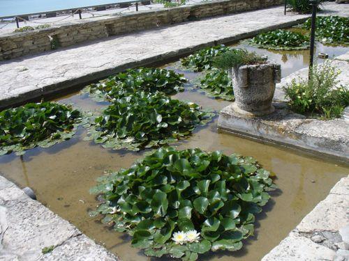 Водните лилии