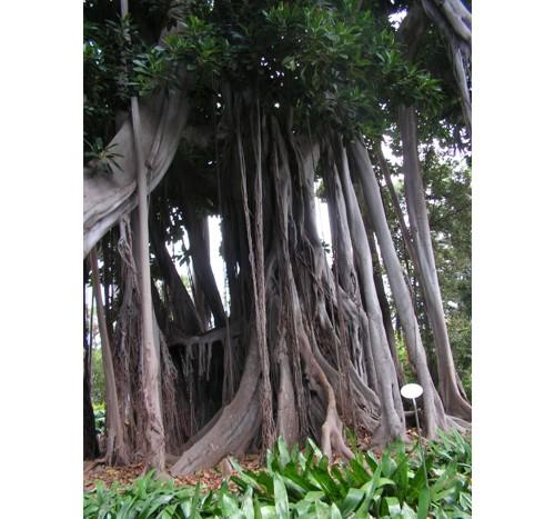 Дърво в ботаническата градина