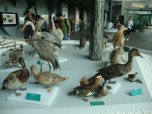Птичият свят на езерото