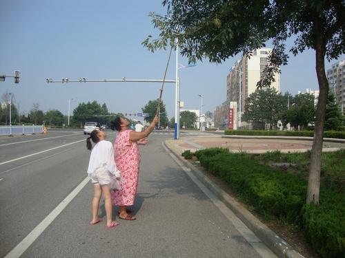 Жена с дете ловят цикади
