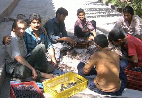 Иранците