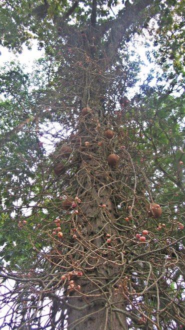 Странно дърво