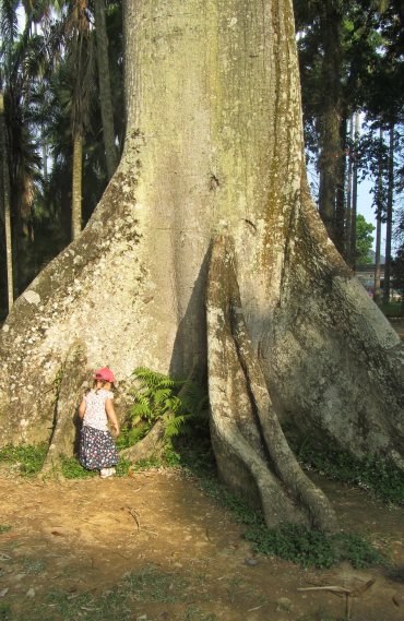 Огромно дърво в Ботаническата градина