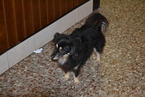 Барчето на Punta Sabbioni, кучето домакин